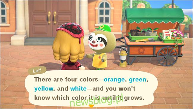 kolory dyni anch leif